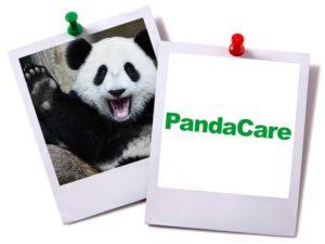 This panda is waving at you.